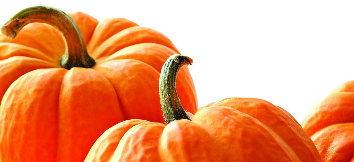 Find Locally Grown Pumpkins